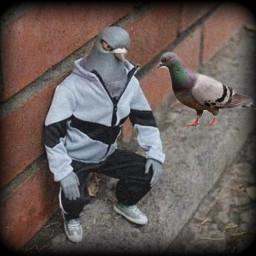 pigeon guy strange cold petsandanimals bird brickwall freetoedit
