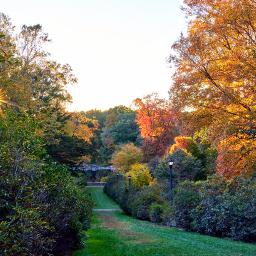 naturephotography walkinthepark sunburst alley autumn🍁 freetoedit autumn