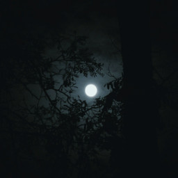 myphotography nature trees moon moonlight dark night sky background freetoedit