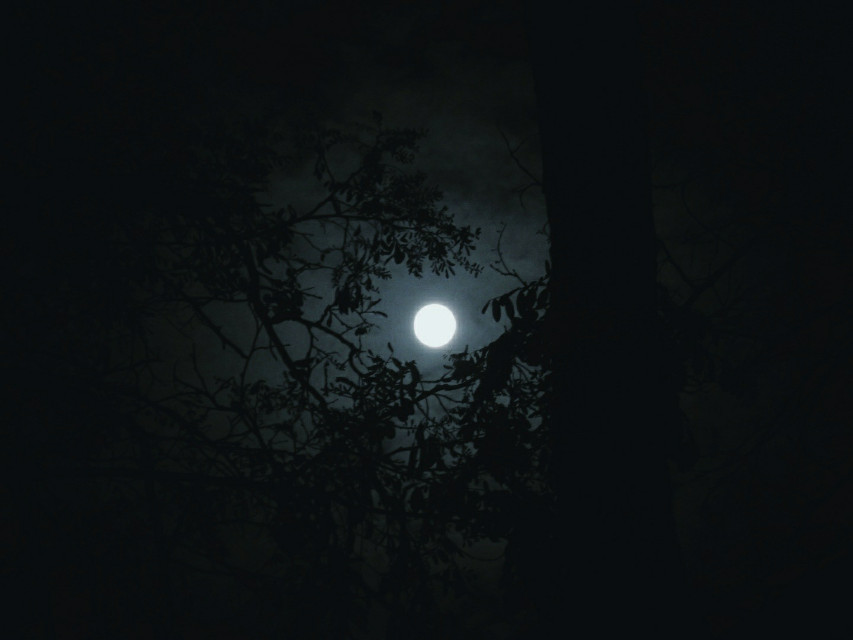 🖤  #myphotography #nature #trees #moon #moonlight #dark #night #sky #background #freetoedit