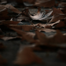 photography atumnleaves atummtime mood leaves closeup contrast freetoedit