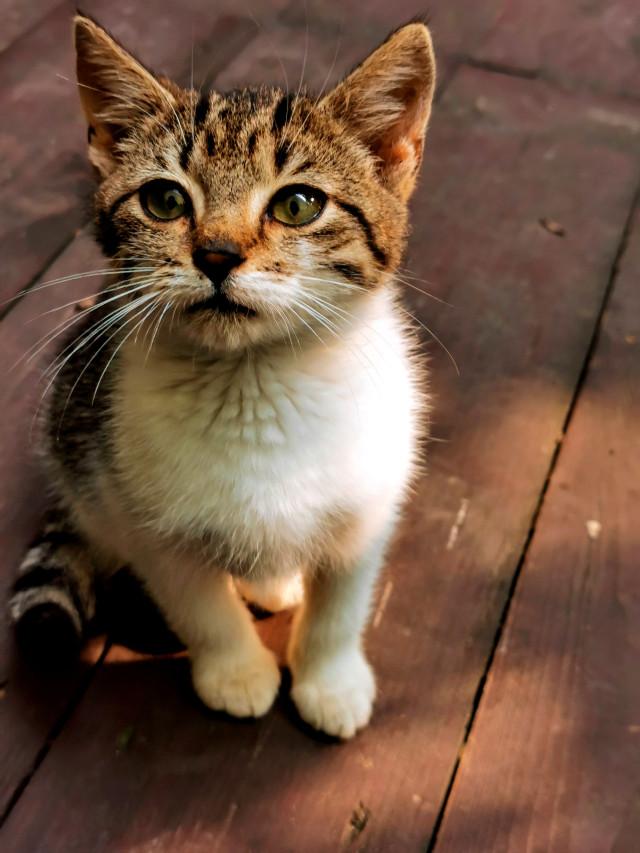 #animal #petsandanimals #cat #kitten #catseyes #myphoto #myclick #HeyPicsArt #picsartmaster #nofilters #photography #naturphotography