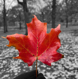autumn leave forest orient_arts madewithpicsart heypicsart makeawesome picsart freetoedit