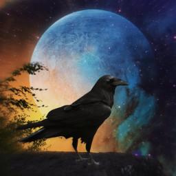 halloween crow raven freetoedit