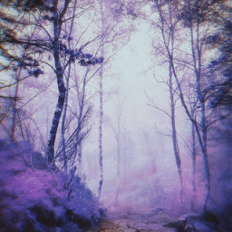forest background backgrounds mistery fantasy freetoedit