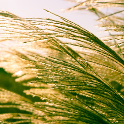 freetoedit nature interesting photography sunset grass