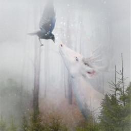 heypicsart mastershoutout magical forest fantasy enchanting myedit madewithpicsart picsarteffects freetoedit