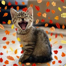 freetoedit cat leaves cute madebyme vote4meplz mlbforever srcautumnleaves autumnleaves