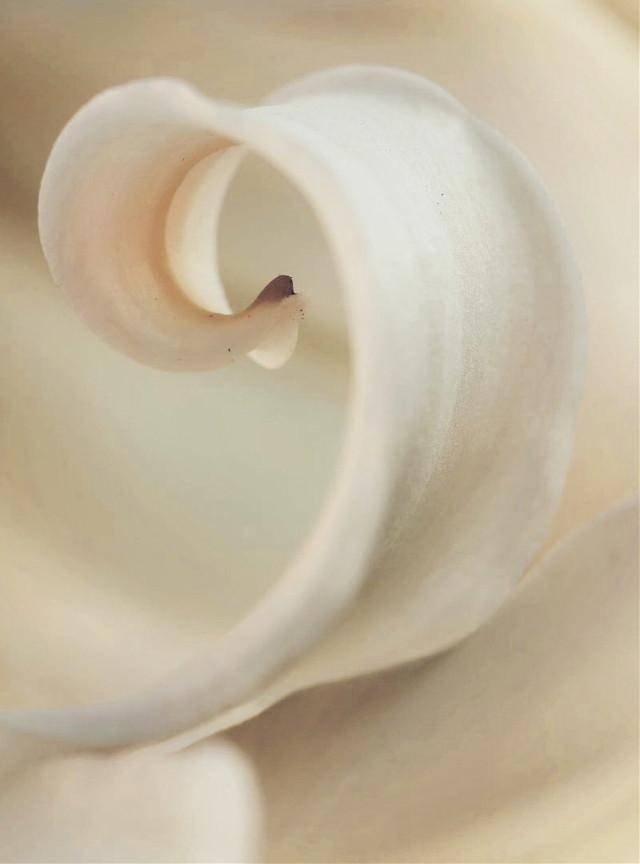 #nature #flower #delicatebeauty #naturesbeauty #closeup #closeupflower #natureabstract #macroflower #flowerdetail #petal #closeupflowerphotography
