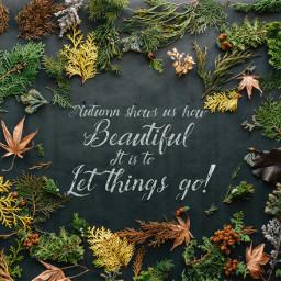 autumn quotesandsayings freetoedit unsplash