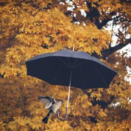 freetoedit challenge autumn mrlb2000 myart madewithpicsart umbrella amazing ircundertheumbrella undertheumbrella