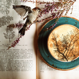 book tea bird flowers photocompilation layout freetoedit