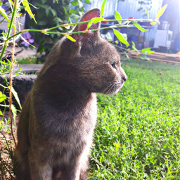 cat🐈 cat