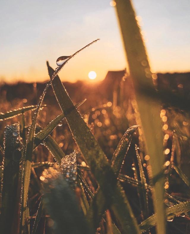 #aftertherain #morninglight #nature #sunrise #freshmornings the #weatherischanging  #changingseason #wildplants #waterdroplets #raindropsonleaves #beautifulsunriselight #lowangleshot #naturephotography
