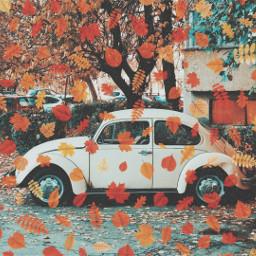 autumnleaves autumncolors autumnvibes cars oldcars beetlebug freetoedit srcautumnleaves