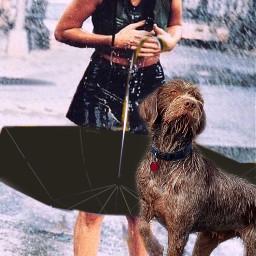 girl dog pet umbrella raining ircundertheumbrella