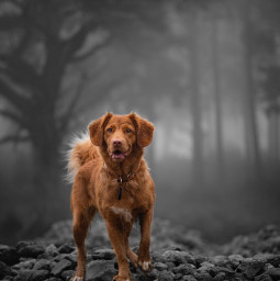 dog pet forest colorsplash colorsplasheffect blackandwhite orient_arts topinambur madewithpicsart heypicsart makeawesome picsart freetoedit