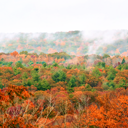 naturephotography backroadview cloudyskybackground foggymorning autumncolors freetoedit