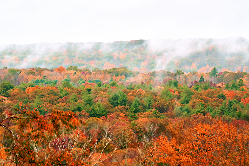 #naturephotography #backroadview #cloudyskybackground #foggymorning #autumncolors