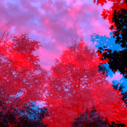 red blue trees fall cloudy