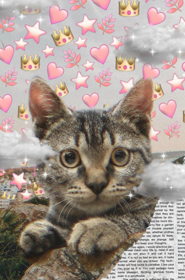 Cat🐈 #cat #cute #emoji #background #crown  #hearts #stars #leavs #aesthetic #animal #newspaperbackgrounds #clouds #shinny #animaleye #idk #hashtag #like #follow #toomanyhashtags