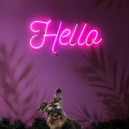 hello dog shadoweffect freetoedit ecneonsign neonsign