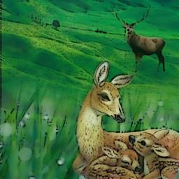 deer motherandchild bambi nature comiceffet freetoedit