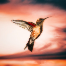 freetoeditto bird love freedom flying freetoedit