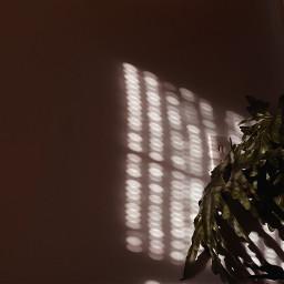 freetoedit aesthetic plant aestheticplants shadow goldenhour light sun