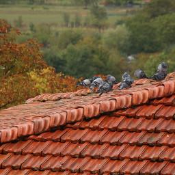 roof birds landscape myphotography piccioni