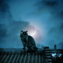 blackcat halloween night freetoedit