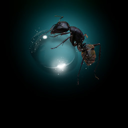 ant waterdrop macro freetoedit unsplash
