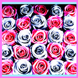 venusroses rosebox foreverroses pink blue iloveyou truelove gobigorgohome realmengiveroses art gifts romantic stunner original nature summer party anniversary biggerandbetter savealife heart appreciation caring emotions freetoedit