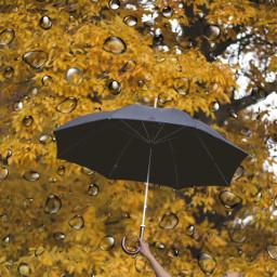 lillyk loverainning freetoedit ircundertheumbrella undertheumbrella
