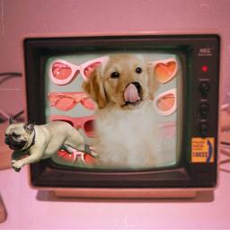 challenge doglove puppies sunglasses freetoedit rcontv ontv