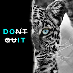 jaguar animal animallover sayingsand sayingsandquotes freetoedit