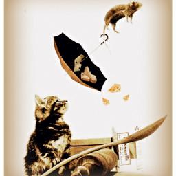 noooo freetoedit ircundertheumbrella undertheumbrella