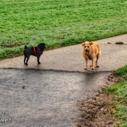 dog dogsofpicsart dogday doglove dogslife