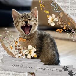freetoedit cat paws madebyme vote4meplz mlbforever srcvintageaesthetic vintageaesthetic