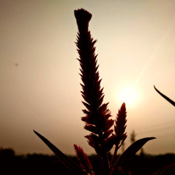 freetoedit sunrisephotography photography naturephotography pcpowerofnature powerofnature aditings spreadlove