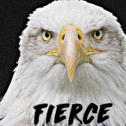 fierce text baldeagle bird almosthuman petsandanimals eagle noiseeffect freetoedit