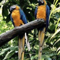 powerofnature parrots animalkingdom pcpowerofnature