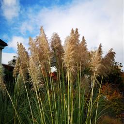 freetoedit grass grasses