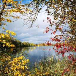 freetoedit niceview lake leaves autumn