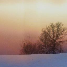 winter trees snow drift twilight freetoedit