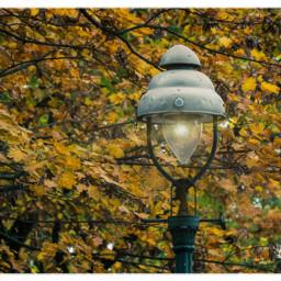 autumncolors streetlight gaslight tree autumn freetoedit