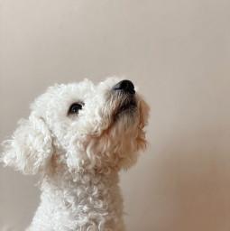 freetoedit dog puppy puddles aesthetic