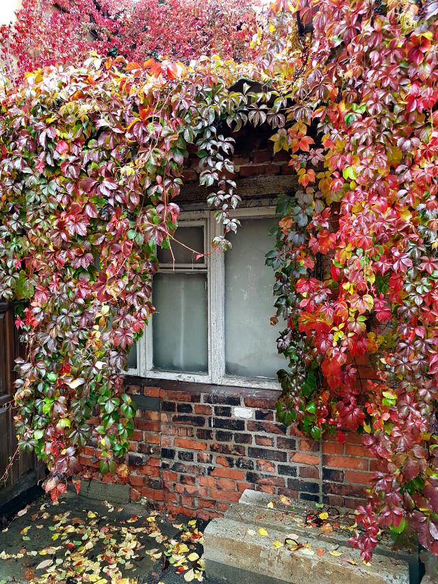 #autumn #oldhouse #autumncolors #window #background  #freetoedit