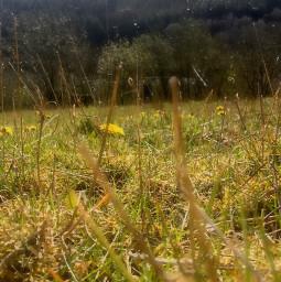 summer grassfield earthaesthetic