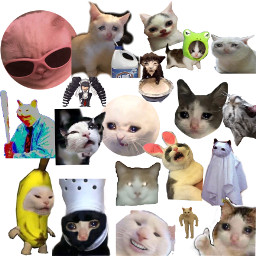 bunnygirl froghat cat mem freetoedit
